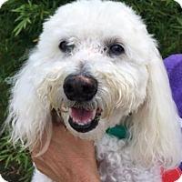 Adopt A Pet :: Coco - Centerville, GA