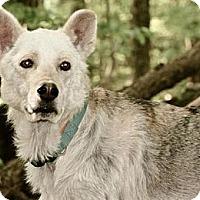 Adopt A Pet :: Gypsy - Hastings, NY