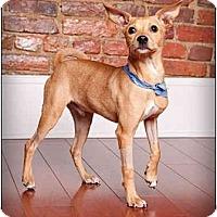 Adopt A Pet :: Turner - Owensboro, KY