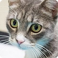 Adopt A Pet :: Pookie - Chicago, IL