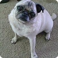 Adopt A Pet :: Jessie - Hinckley, MN