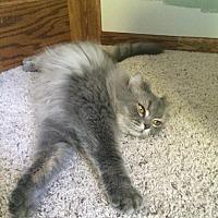 Adopt A Pet :: Smokey - Chesterfield Township, MI