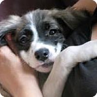 Adopt A Pet :: Dixie Cup - Marlton, NJ