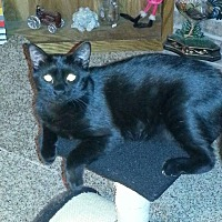 Adopt A Pet :: Geneva - Wichita Falls, TX