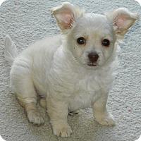 Adopt A Pet :: Sparky - Henderson, NV
