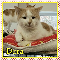 Domestic Shorthair Cat for adoption in Atco, New Jersey - Dora