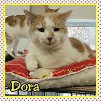 Adopt A Pet :: Dora - Atco, NJ