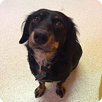 Adopt A Pet :: Mandy - Gig Harbor, WA