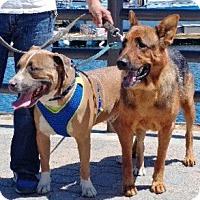 Adopt A Pet :: *URGENT* Bucky & Franco - Van Nuys, CA