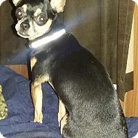Chihuahua Dog for adoption in Carthage, North Carolina - Eros