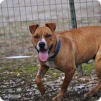 Adopt A Pet :: Essie - Manchester, CT