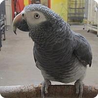Adopt A Pet :: Boaz - Edgerton, WI