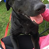 Adopt A Pet :: Rebel - Canoga Park, CA