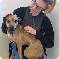 Adopt A Pet :: Georgie - Elyria, OH