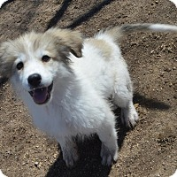 Adopt A Pet :: Leia - Peyton, CO
