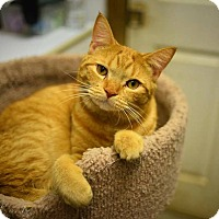 Adopt A Pet :: Pumpkin - Beacon, NY