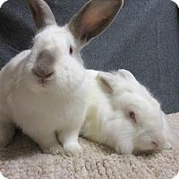 Adopt A Pet :: Dezi & Joel - Newport, DE