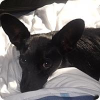 Adopt A Pet :: Sleepy - Quincy, IN