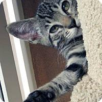 Adopt A Pet :: Rocky - Davis, CA