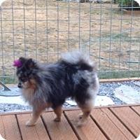 Adopt A Pet :: Zeus - Bellingham, WA