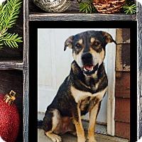 Adopt A Pet :: Falcor - Greenville, NC