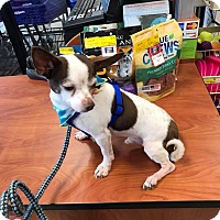 Adopt A Pet :: Dexter - North Brunswick, NJ