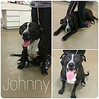 Adopt A Pet :: Johnny - Steger, IL