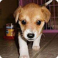 Adopt A Pet :: Mindy - Silsbee, TX