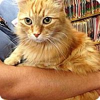 Adopt A Pet :: RJ - Monroe, GA