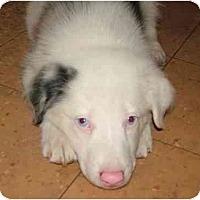 Adopt A Pet :: Edison - Orlando, FL
