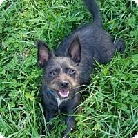 Adopt A Pet :: Lorelei - Avon, NY