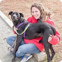 Adopt A Pet :: Lolita - Midlothian, VA