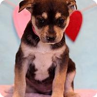 Adopt A Pet :: Mari - Waldorf, MD
