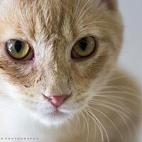 Adopt A Pet :: ELLISON - Houston, TX