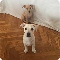 Adopt A Pet :: Gouda - Concord, CA