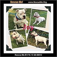 Adopt A Pet :: JOY - hollywood, FL