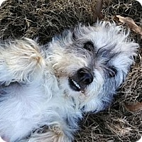 Adopt A Pet :: Duke - Hagerstown, MD