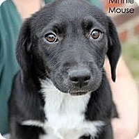 Adopt A Pet :: Minnie - South Jersey, NJ