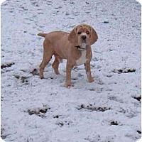 Adopt A Pet :: Charlie2 - Tacoma, WA