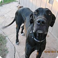 Adopt A Pet :: Lucy Lu - Phoenix, AZ