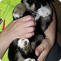 Adopt A Pet :: Juliet - Fredericksburg, VA