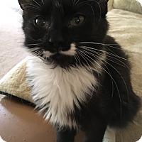 Adopt A Pet :: Felicia - Monroe, GA