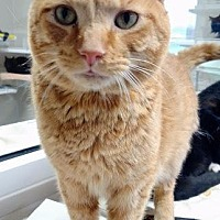 Adopt A Pet :: Clark - Fremont, OH