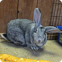 Adopt A Pet :: Big Bertha - Foster, RI
