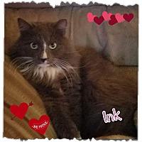Adopt A Pet :: Ink - Harrisburg, NC
