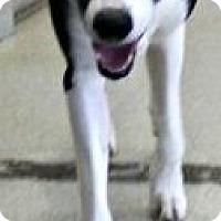 Adopt A Pet :: Millie - Irmo, SC