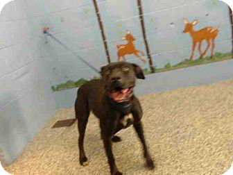 Pit Bull Terrier Mix Dog for adoption in San Bernardino, California - URGENT ON 2/18  San Bernardino