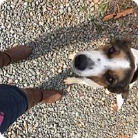 Adopt A Pet :: Delilah - Stafford, VA