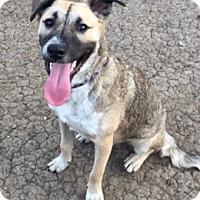 Adopt A Pet :: Ozzy - McKinney, TX