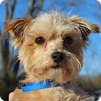 Adopt A Pet :: ALEX - Salem, NH